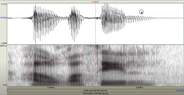 espectrograma - Nuria Gavalda